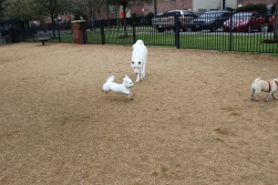 Ralphie LOVES to run!
